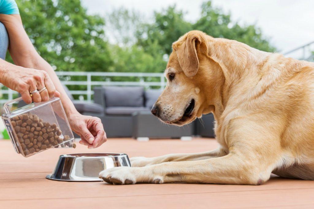 dog-food-1024x682-1.jpg